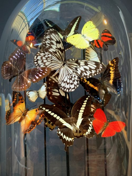 Antique oval dome filled with a mix of colorful butterflies in autumn colors