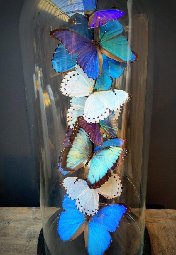 Antieke Stolp met Morpho mix vlinders