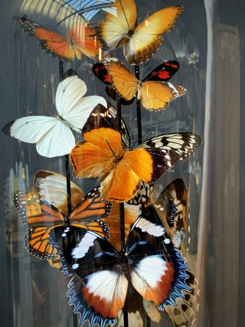 Antique dome filled with a mix of colorful butterflies in autumn colors