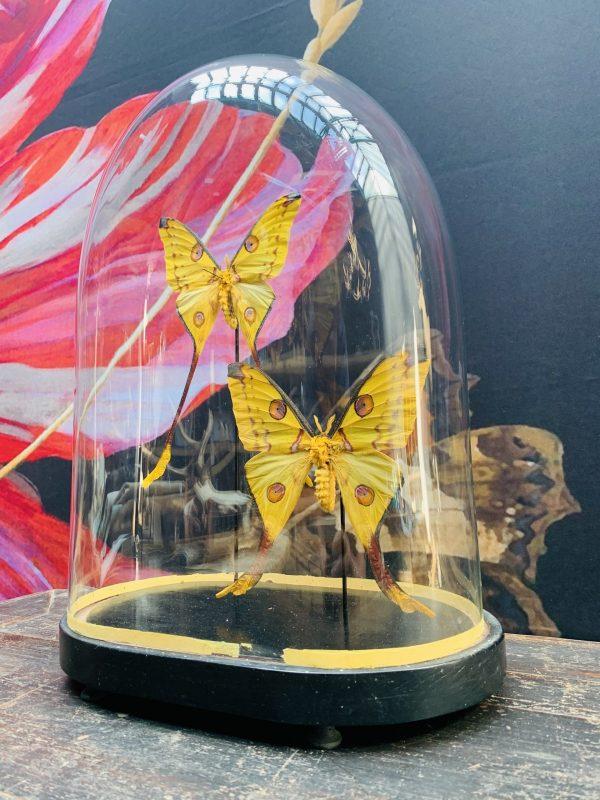 Antieke ovale Stolp met komeetstaart vlinders