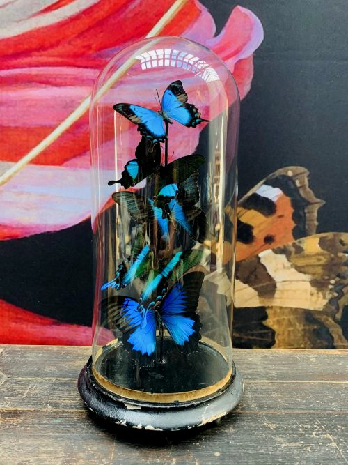 Antique dome with Petrol Papilio butterflies