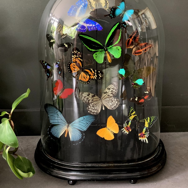 Schmetterlinge und Käfer