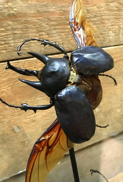 Ancient bell with two big Rhinoceros beetles