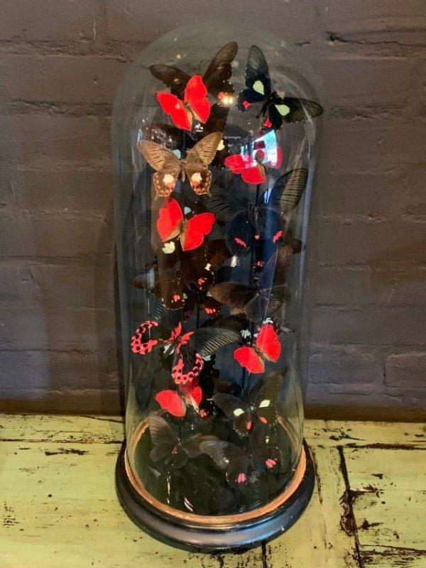 Antike Glocke gefüllt mit einer Mischung aus schwarz / roten Schmetterlingen