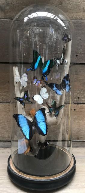Antieke stolp met vlinder mix op druiventak