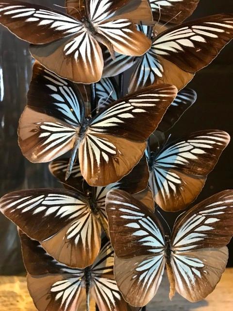 Antike Glasglocke mit Schmetterlingen (Pareronia Tritaea)