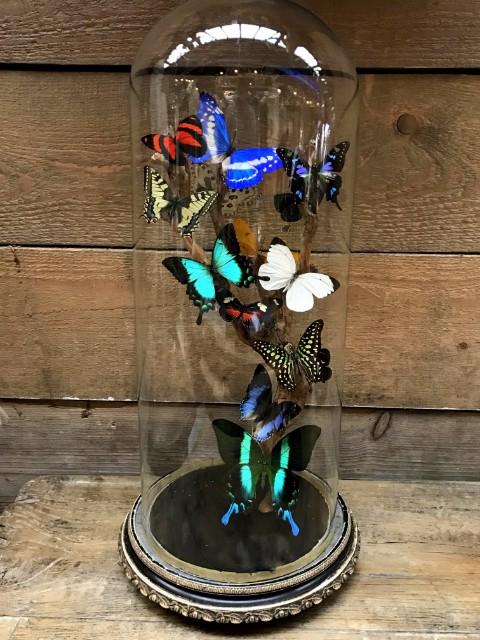 Antike geschnitzte Glocke mit Schmetterlingen, Präparierte Käfe