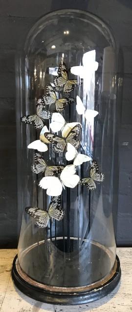 Antieke stolp met Idea vlinders in vlucht
