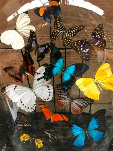 Antieke ovale stolp met kleurrijke vlinders