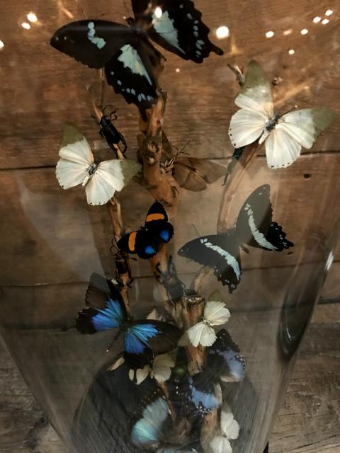 Antike runde Glasglocke mit Weinrebe und blau / grün Mix aus Schmetterlinge und Käfer