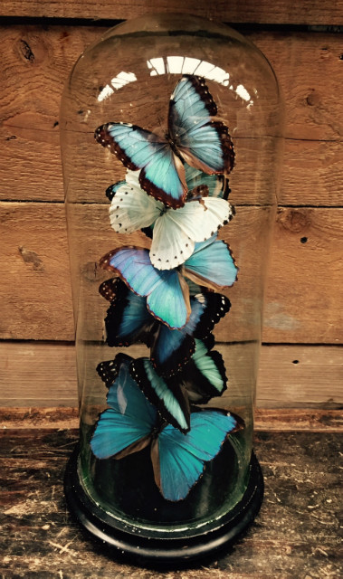 Beautiful antique bell with a mix of 10 different Morpho butterflies
