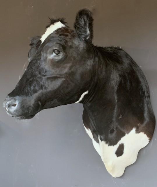 Beautiful stuffed black and white cow.