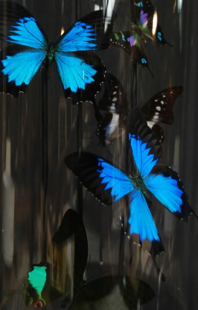 Decoratieve antieke stolp met vlinders
