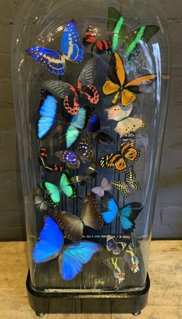 Antieke XXL stolp rijkelijk gevuld met vlinders.