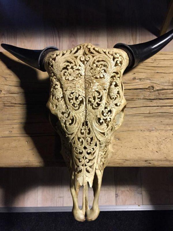 Gegraveerde schedel van een Zebu