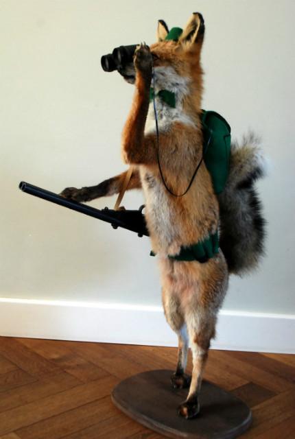 FM 220, Unieke opgezette jagende vos