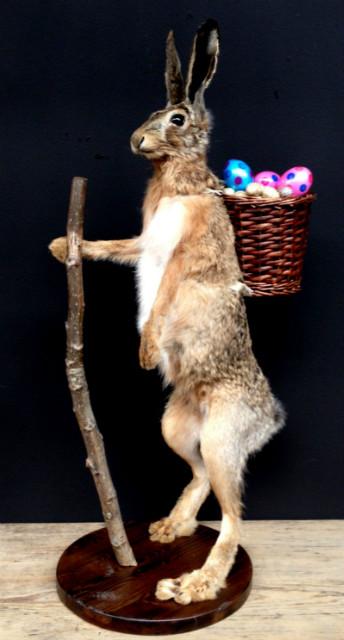 FM 240, Taxidermy Easter bunny
