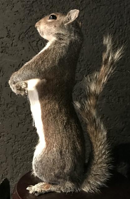 FM 500, Opgezette Super eekhoorn