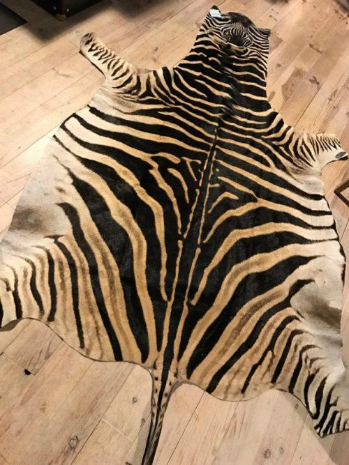 Frisch gegerbte Zebrafelle