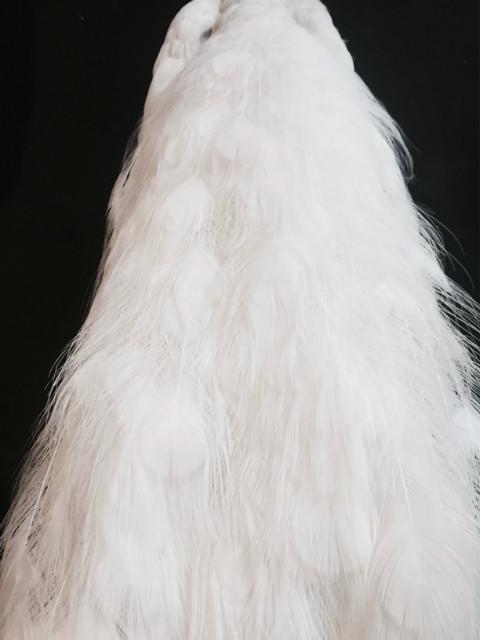 Wunderschöner ausgestopfter weißer Pfau