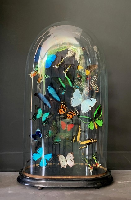 Huge dome richly filled with colorful butterflies