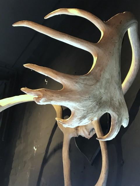 Groot en ruig gevormd gewei van een kariboe