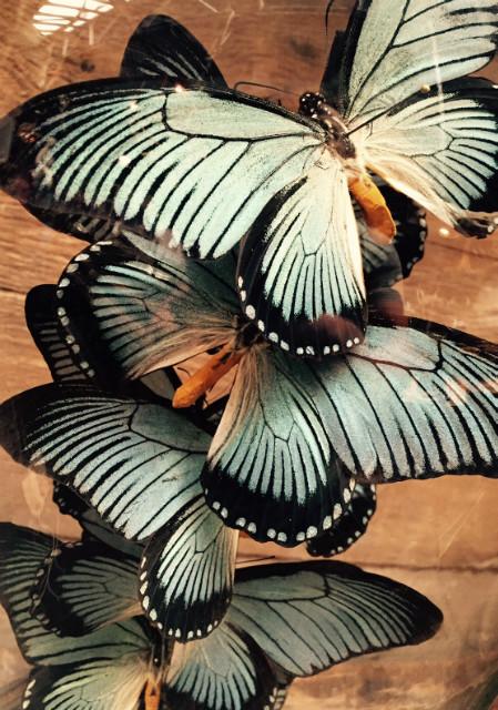 Große antike Glocke 13 Zalmoxis Schmetterlinge