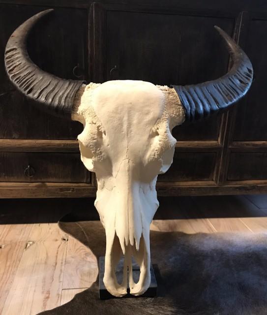 Large bleached water buffalo skull on a Belgian hard stone pedestal