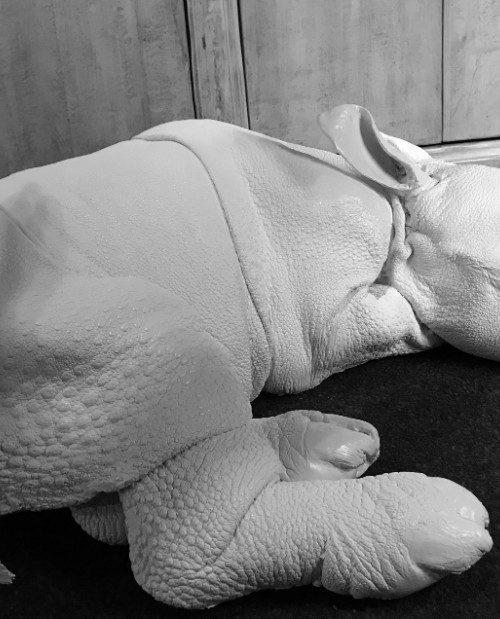 Lebensechte Nachbildung eines Rhinozeros-Kalbes