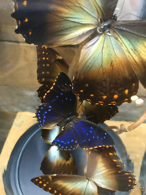 Cloche mit Mix von Schmetterlinge