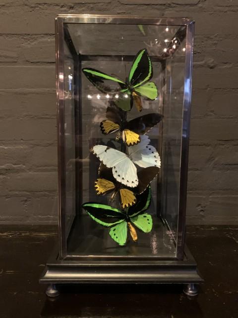 Moderne Glocke mit verschiedenen Schmetterlingen.