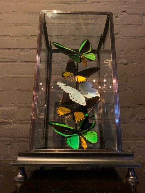 Moderne stolp met diverse vlinders