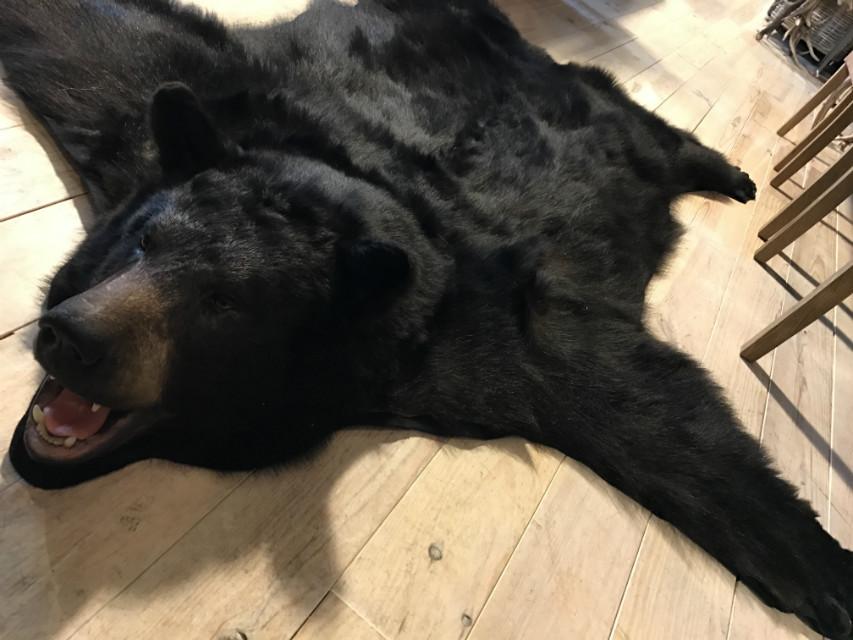Nieuwe AA kwaliteit huid van een grote zwarte beer.