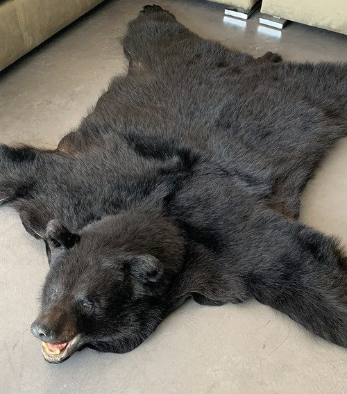 New rugmount of a black bear with a stuffed head