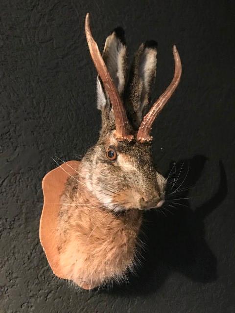 Nieuwe opgezette kop van een haas met gewei (wolpertinger)