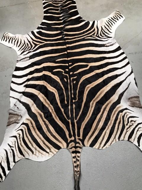 Prachtige zacht gelooide huid van een zebra