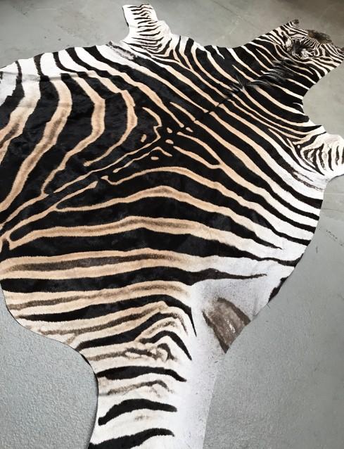Schöne weiche gegerbte Fell eines Zebra