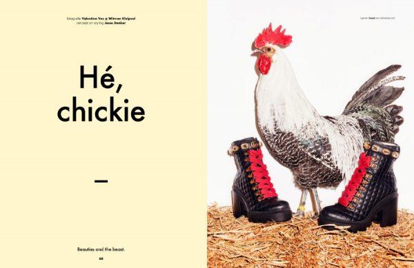 Onze kippen staan model in de laatste editie van &C