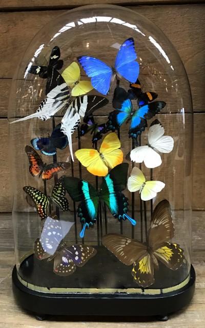 Ovalen oude stolp met kleurrijke mix van vele vlindersoorten