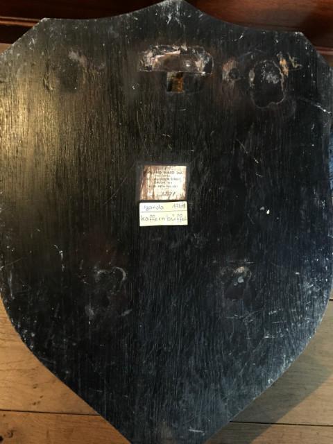 Rare heavy skull of a cape buffalo from Rowland Ward