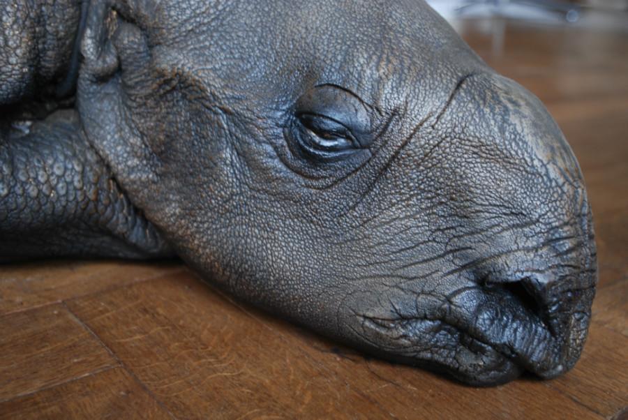 Replica van een neushoorn kalf