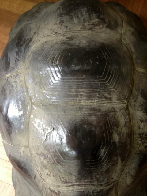 Levensechte replica van een Galapagos schildpad