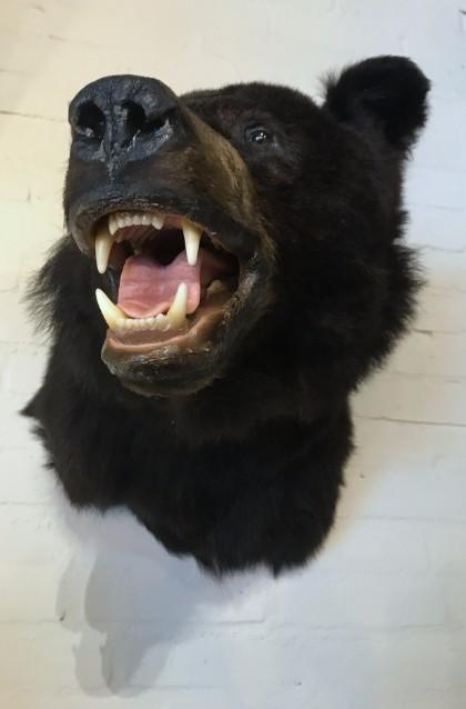 Recent gemaakte opgezette kop van een zwarte beer.