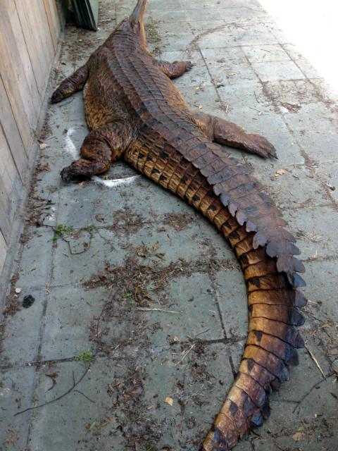 Replica van een onechte gaviaal