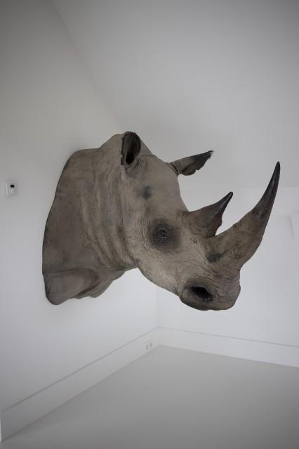 Replica neushoorn kop