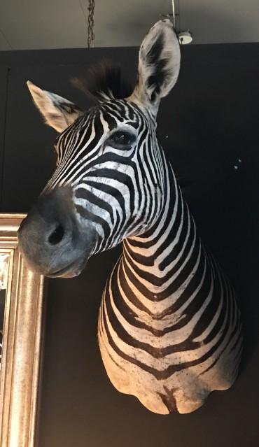 SM 110-A, Taxidermy zebra head