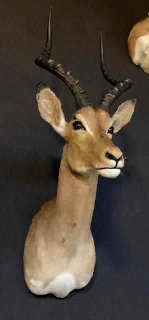 Vintage jachttrofee van een impala