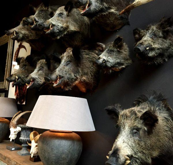 SM 460-C, Stuffed wild boar heads.