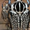 Antike Glasglocke mit schönen Käfern (Chalcosoma Kaukasus)
