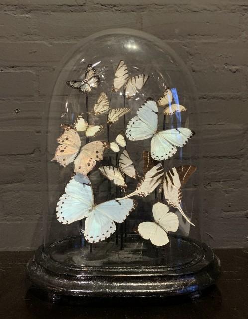 Ovale antieke stolp gevuld met witte vlinders